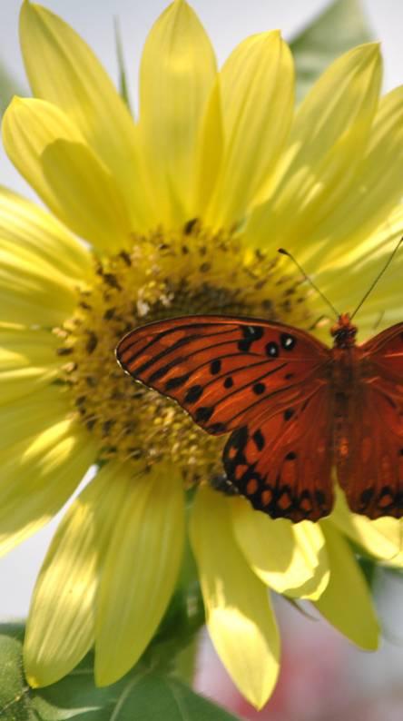 Butterflly Flower