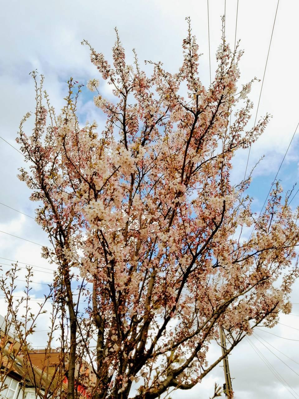 Springtime  wembley