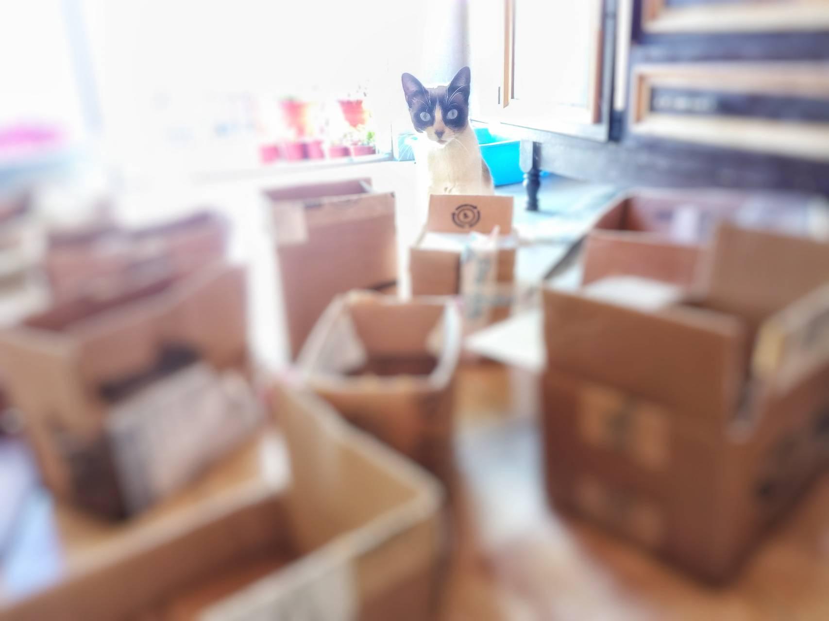 Gato cajas