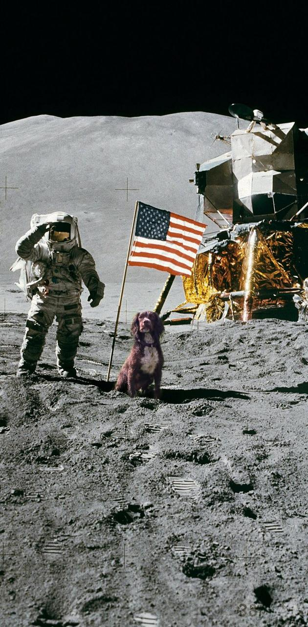 Penny on the moon