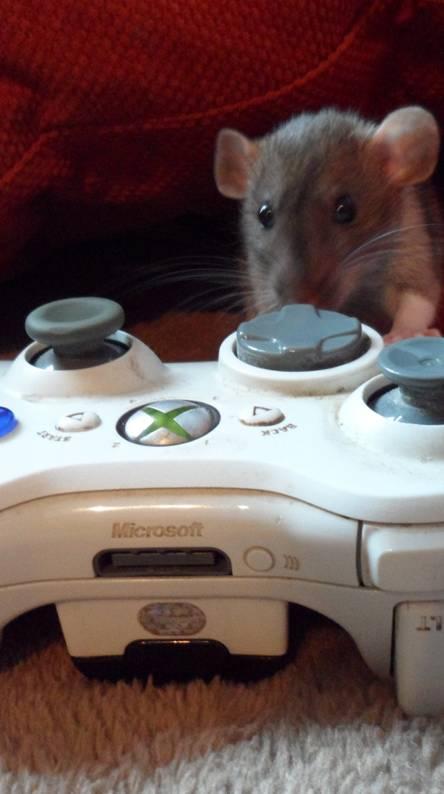 Xbox Rat
