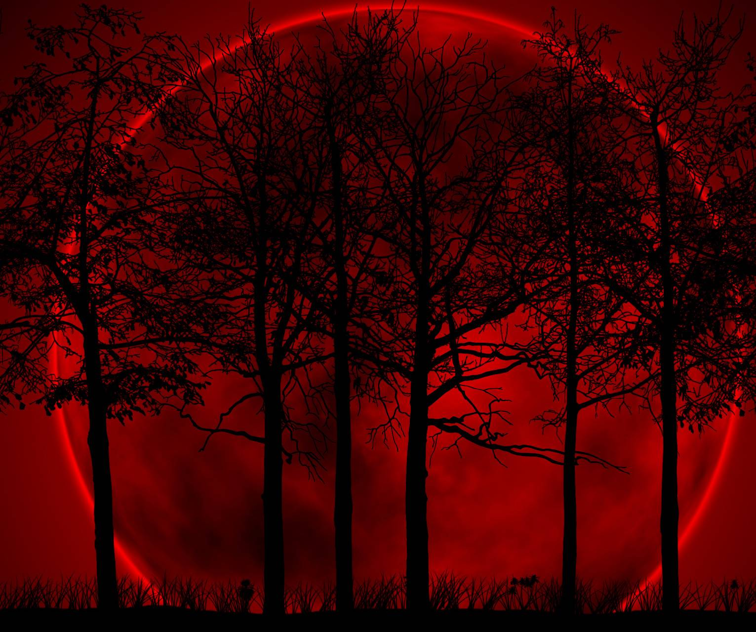 Red Forest Wallpaper By Unknownalien 4c Free On Zedge