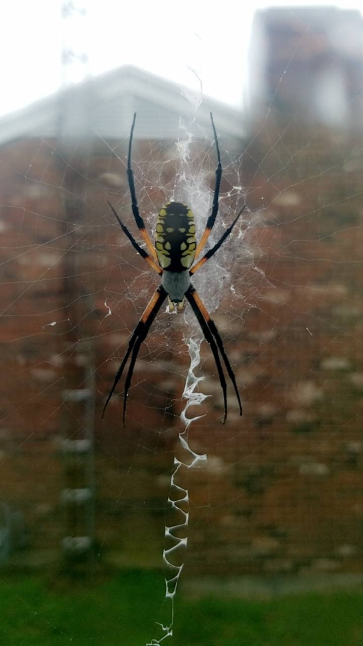 Writing spiders