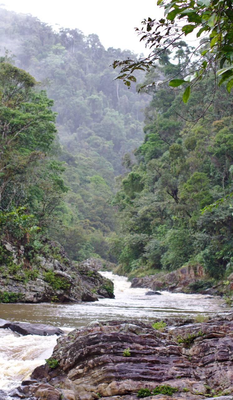 Madagascar Rainfores
