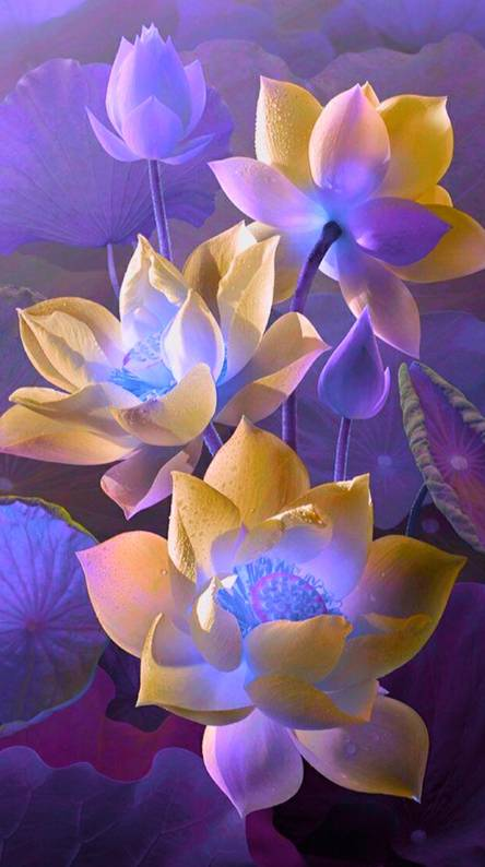 Lotus Flowers Wallpapers Free By Zedge