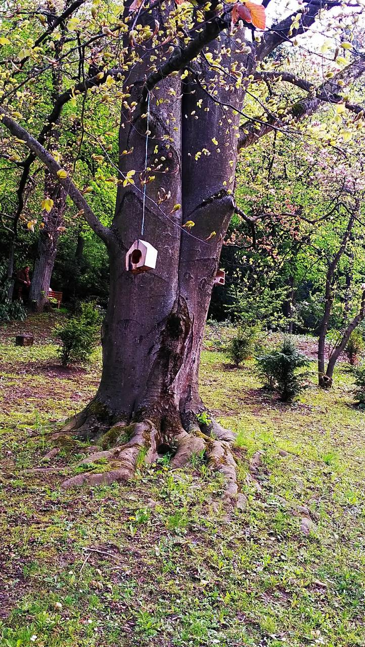 tree Birdhouse