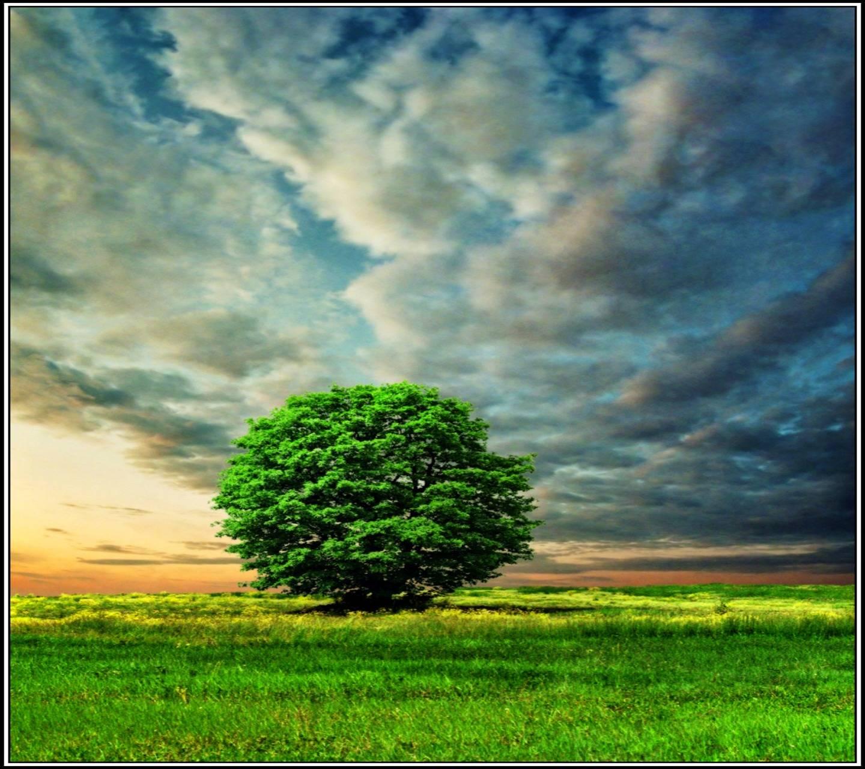 Greeny Nature Hd