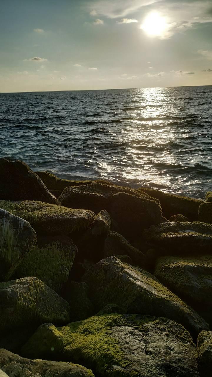 Oceanside nature
