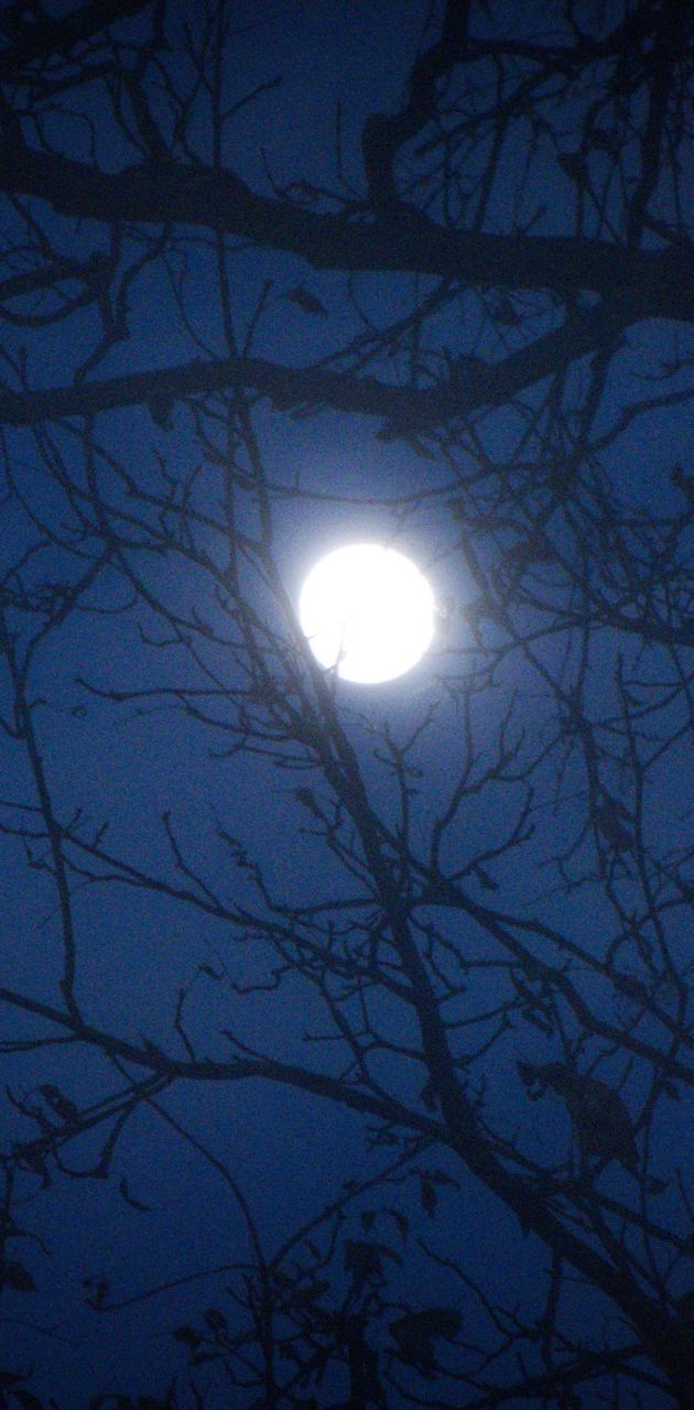 Full Moon Winter