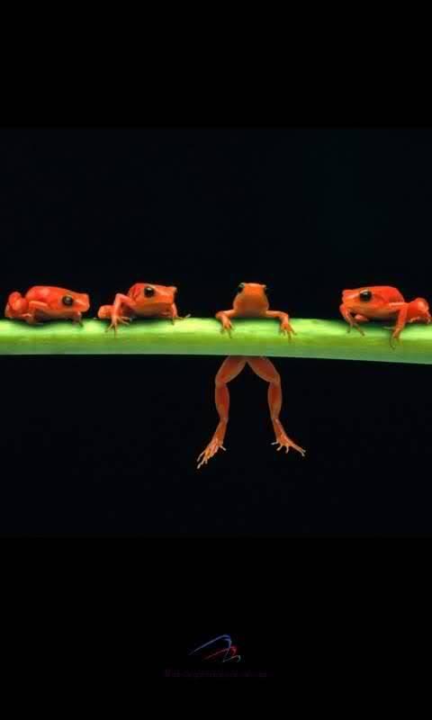 Poor Froggy