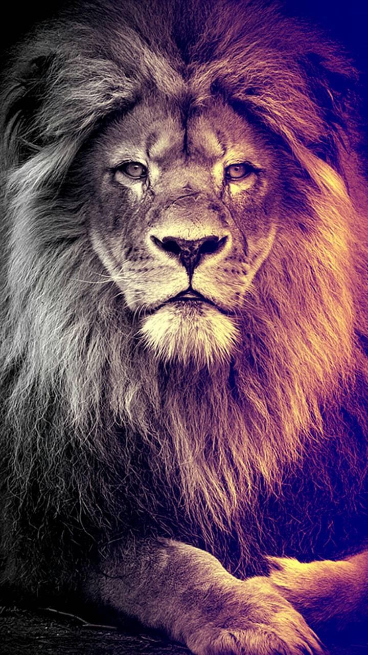 Lion Wallpaper By Designer Kimo C5 Free On Zedge