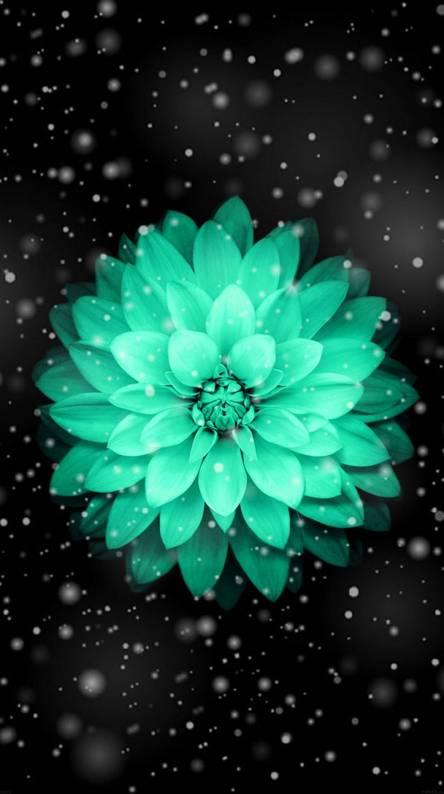 Pretty blue flower