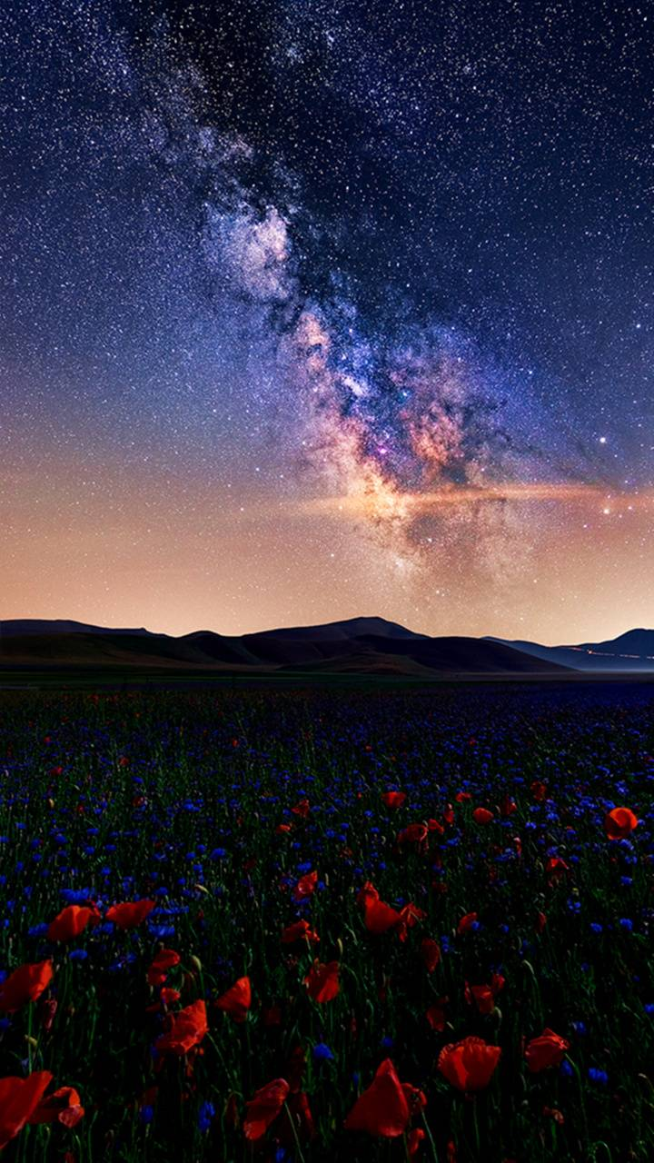 Flowering Stars