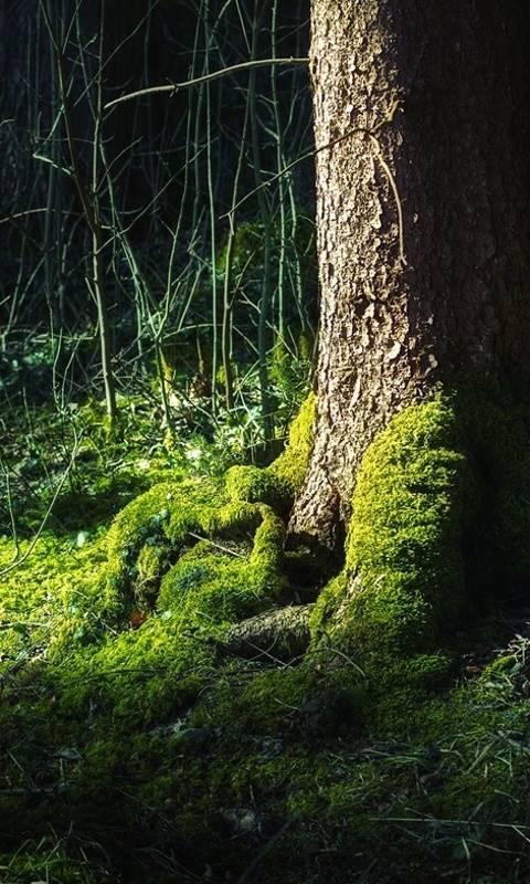 Forest Moss Hd