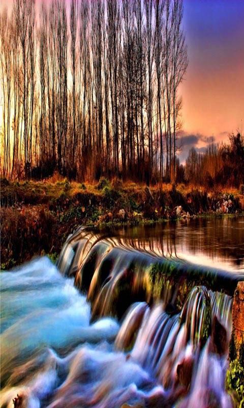 River forest autumn