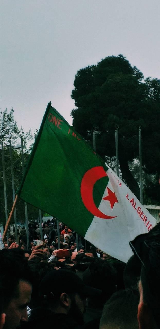 123 viva l algerie
