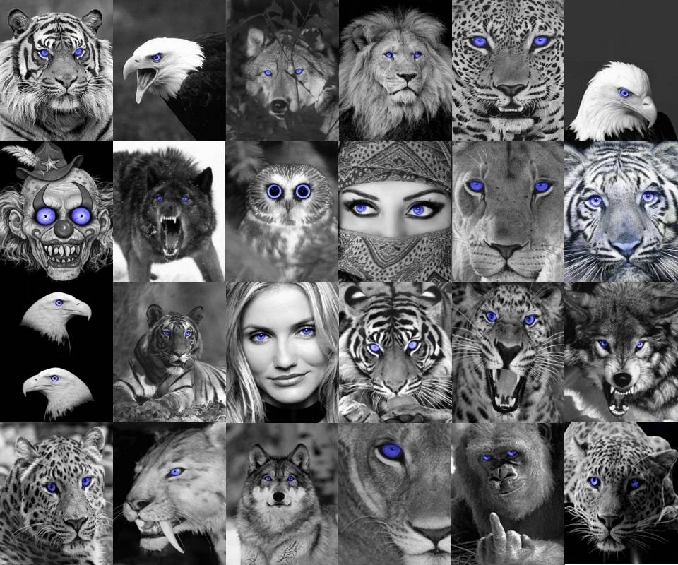 Blue Eyes Collage
