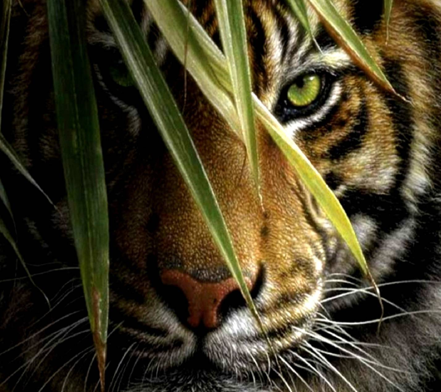 Angry Tiger Wallpaper By Twisterlk 18 Free On Zedge