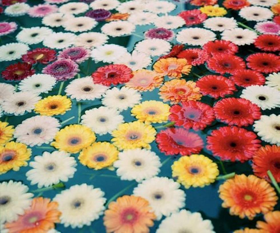Colorful Daisy 907