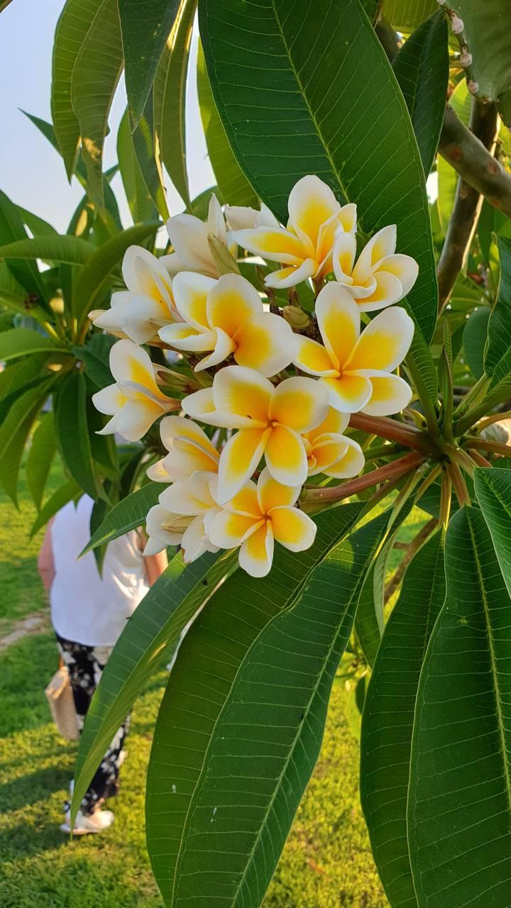 Tropical flower 2