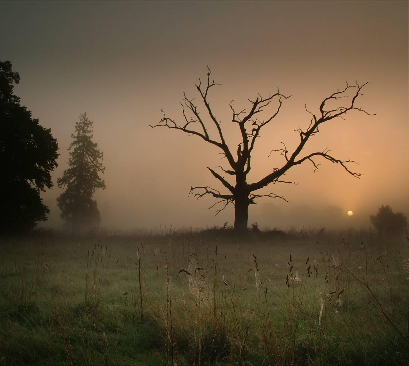 Dark Forest 2