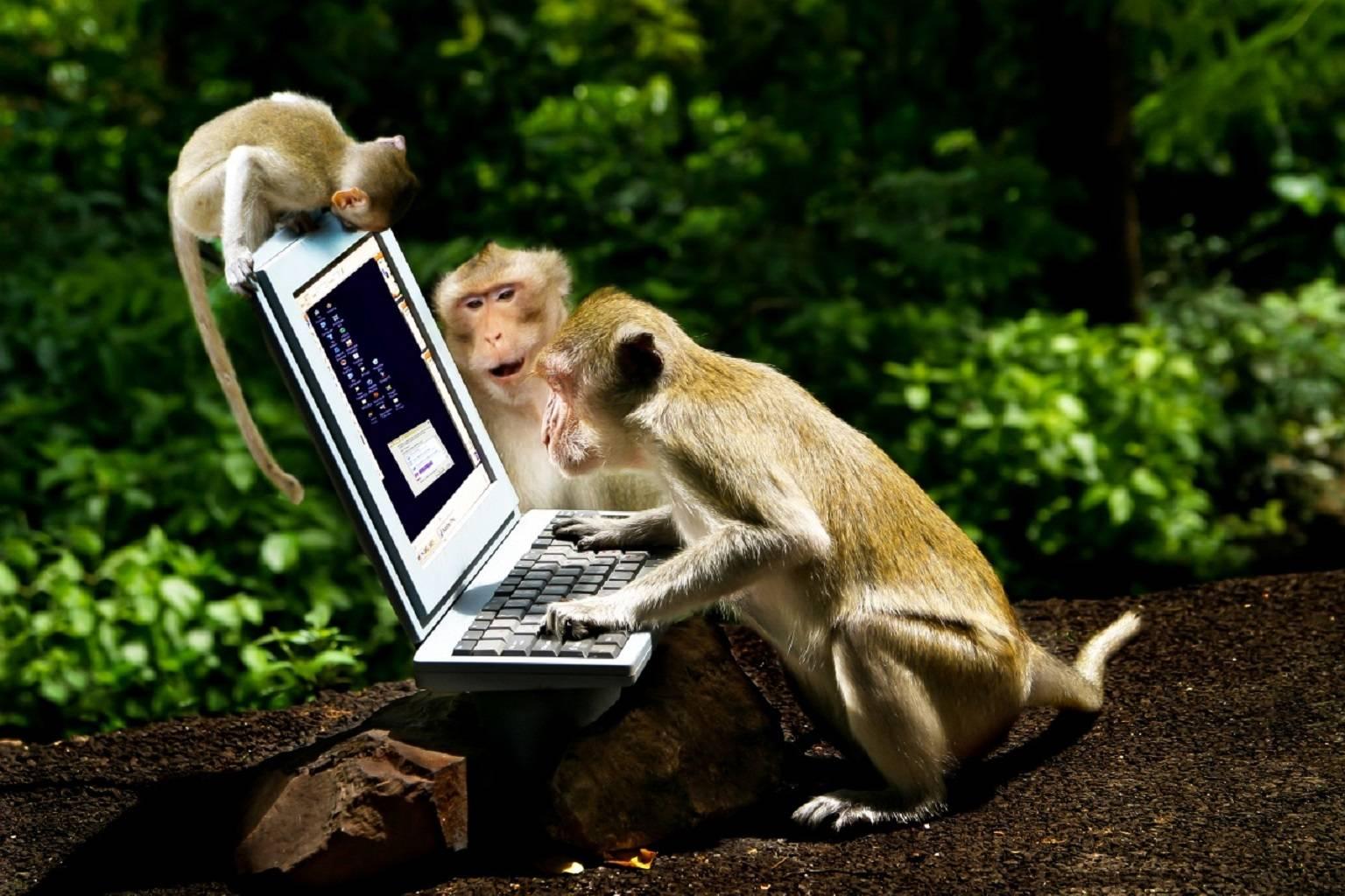 Zedge Monkeys