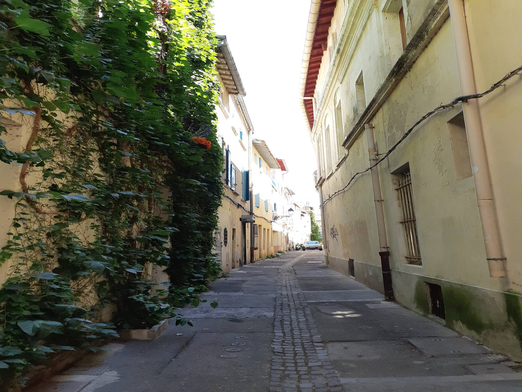 Chemin provencal
