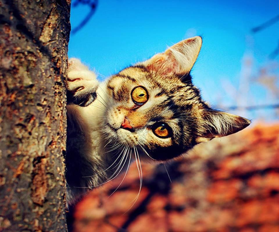 Открытки своими, картинки с кошками с надписью доброе утро