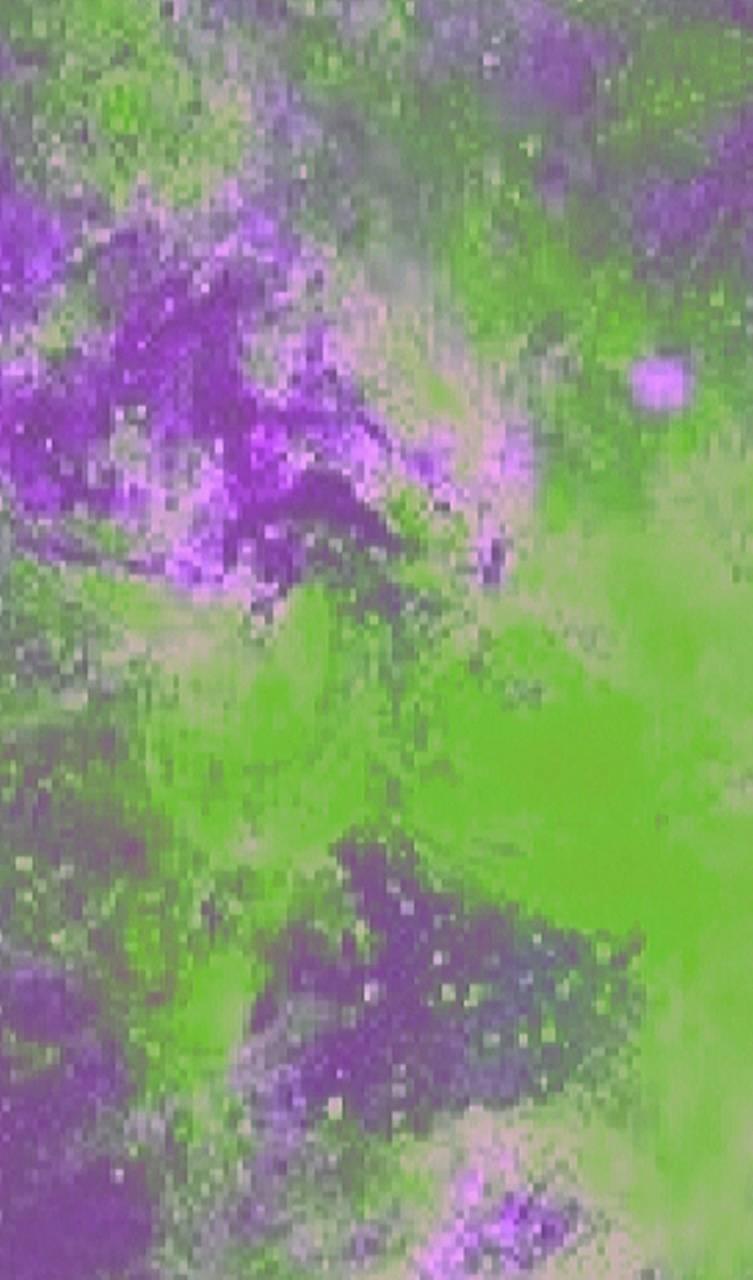 Limegreen Purple