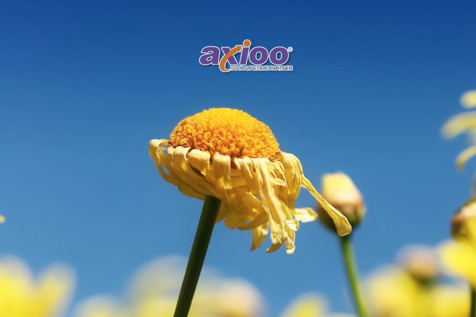 flower axioo