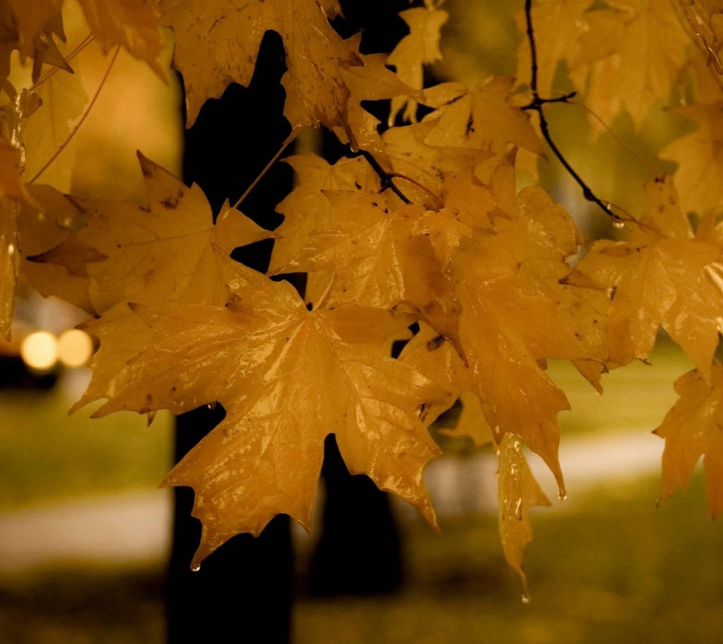 Autumin Leaf
