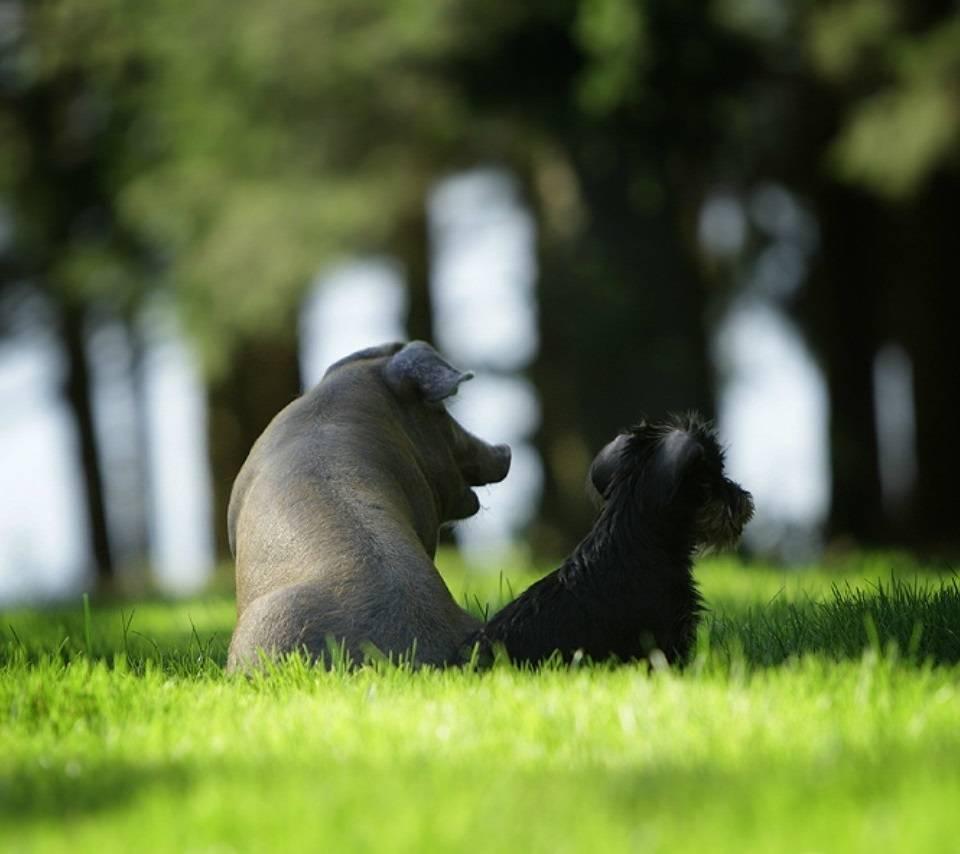 Miss Piggy Mr Puppy