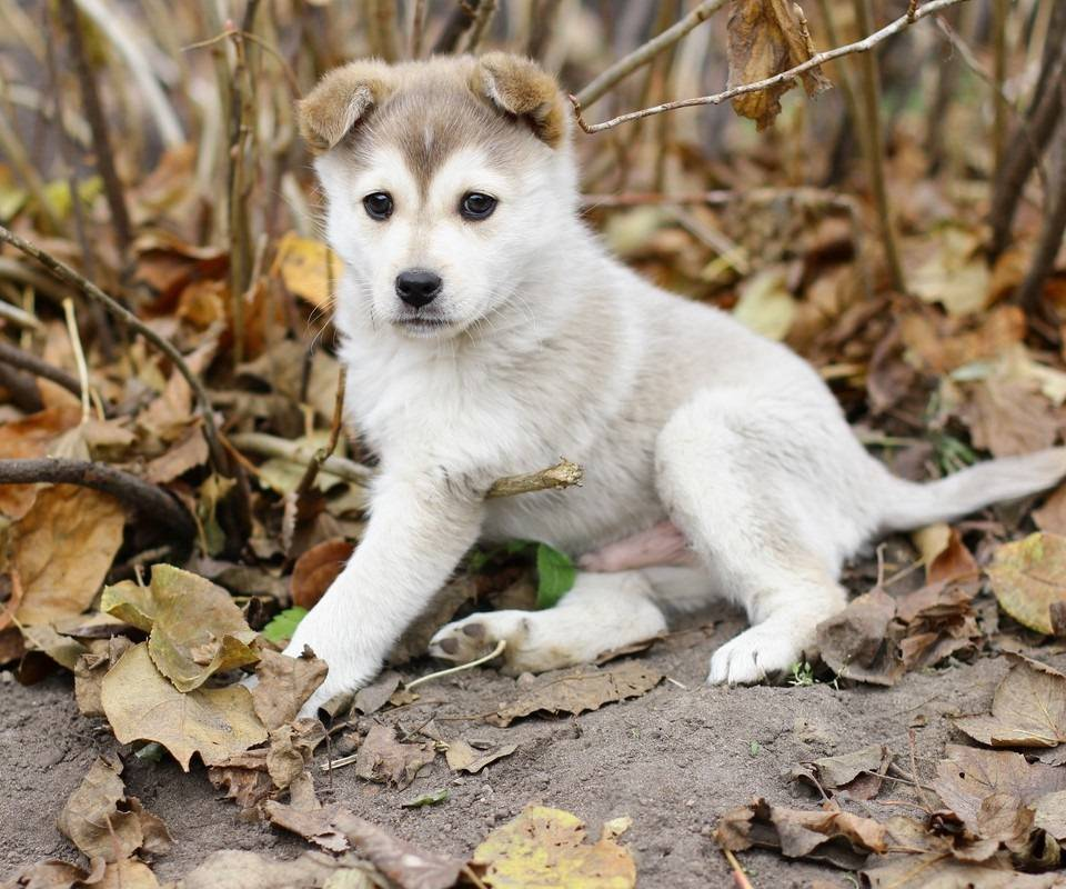 Jungle Puppy