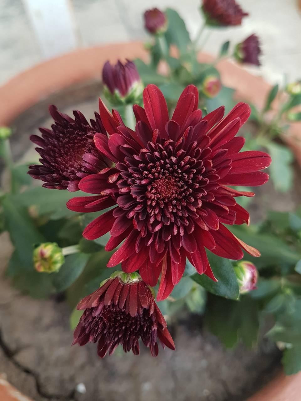 4k flower