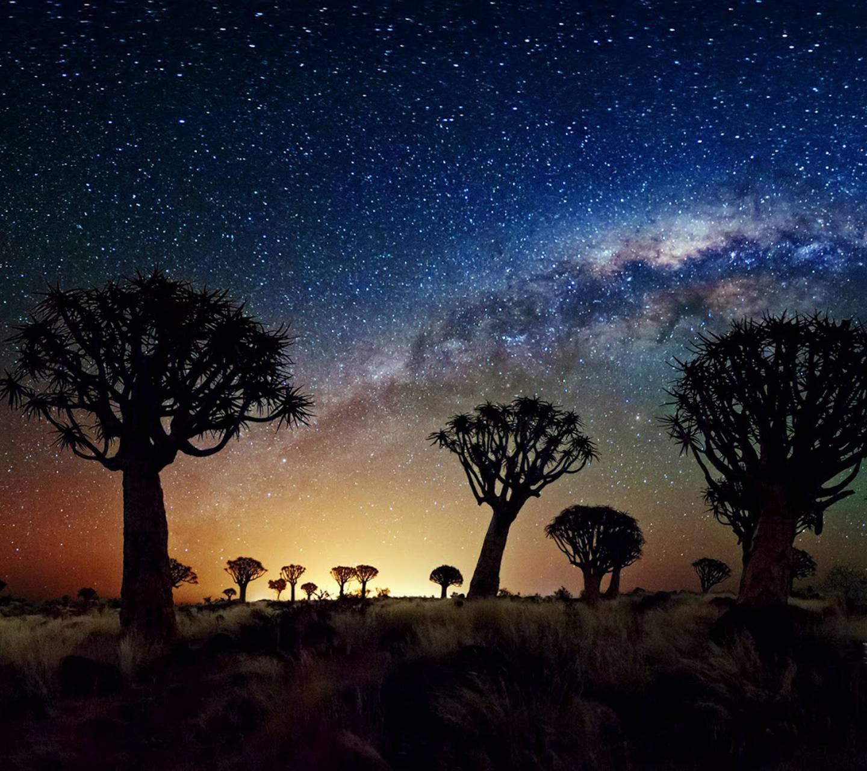 starry sky trees