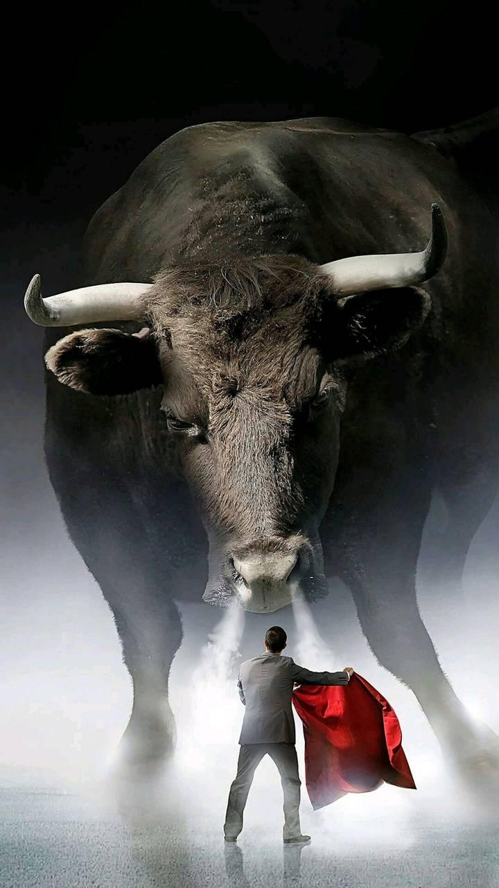 Bull vs man