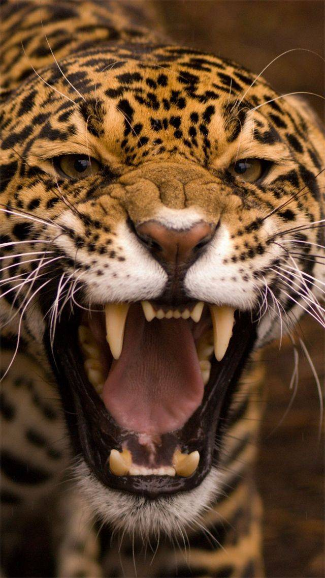 Tiger Iphone5