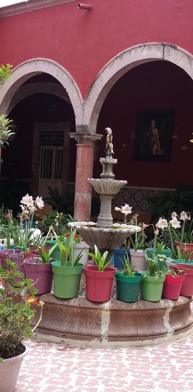El patio jardin
