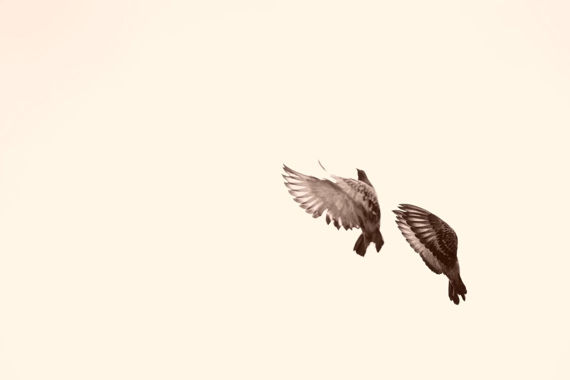 Flighting bird