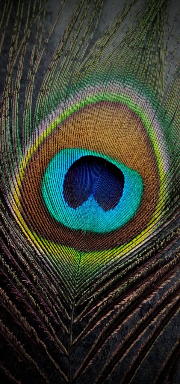 Peacock fins