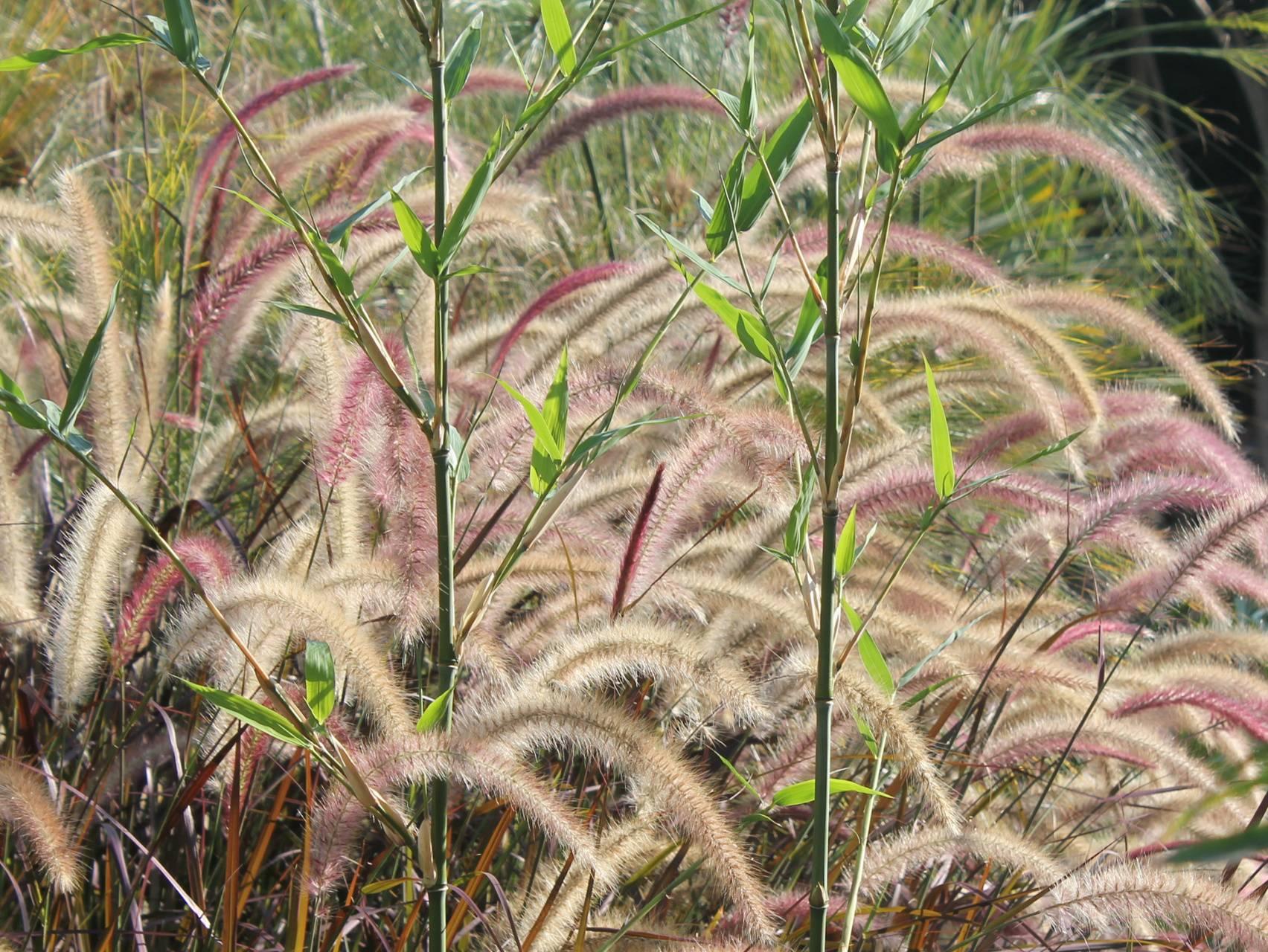 Some Plants