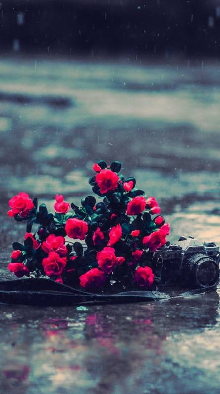 Roses In Fire Wallpapers Free By Zedge