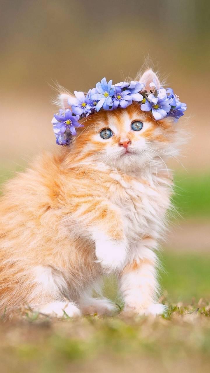 Cute Cat Wallpaper By Hende09 Ca Free On Zedge