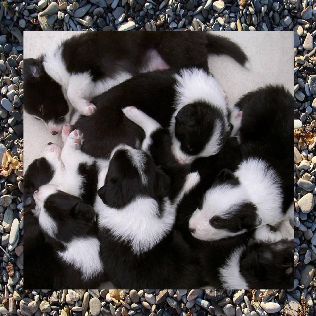 Blanket Puppies