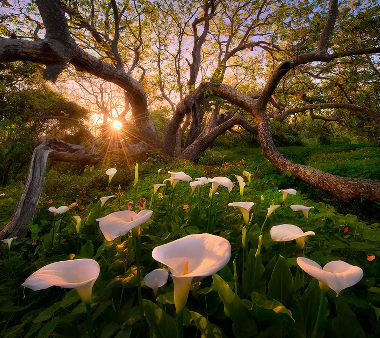 flowers heaven