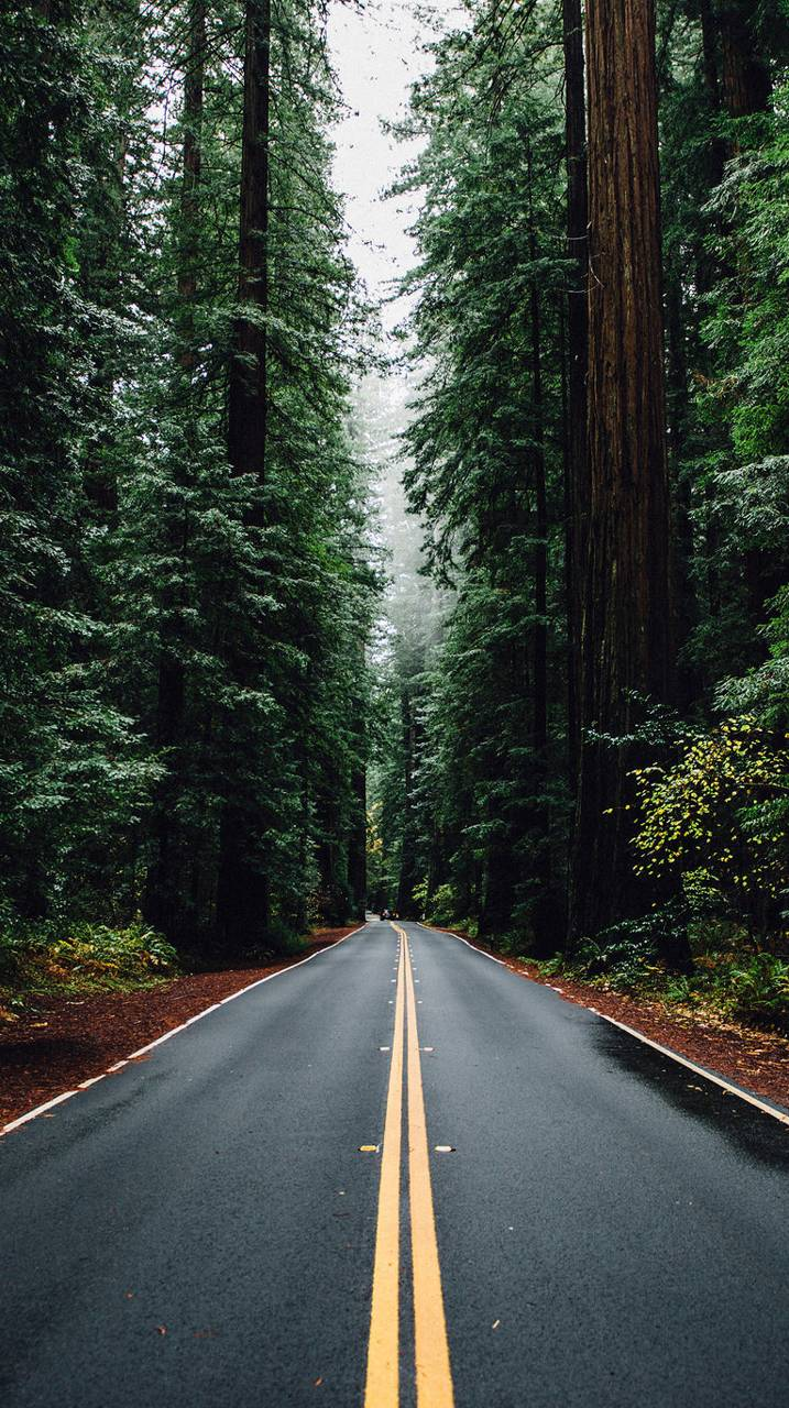 road and trees