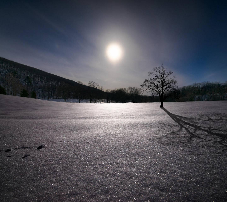 Winter Oak Tree