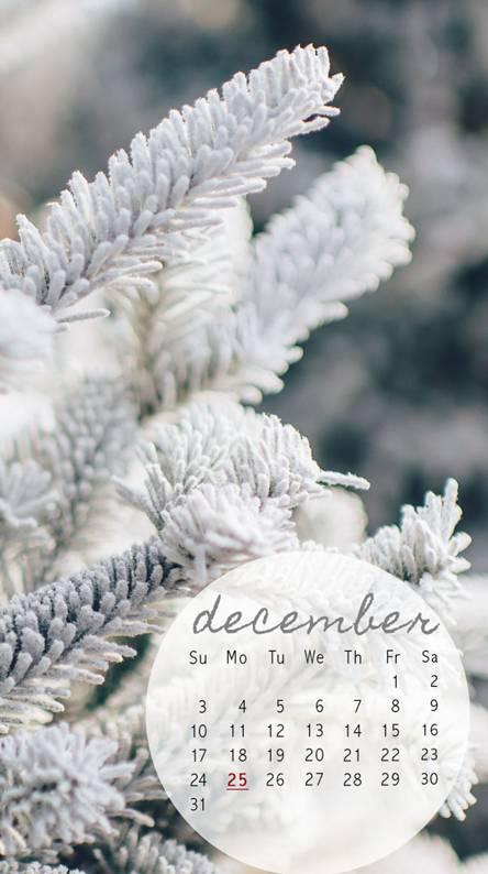 December White Cal