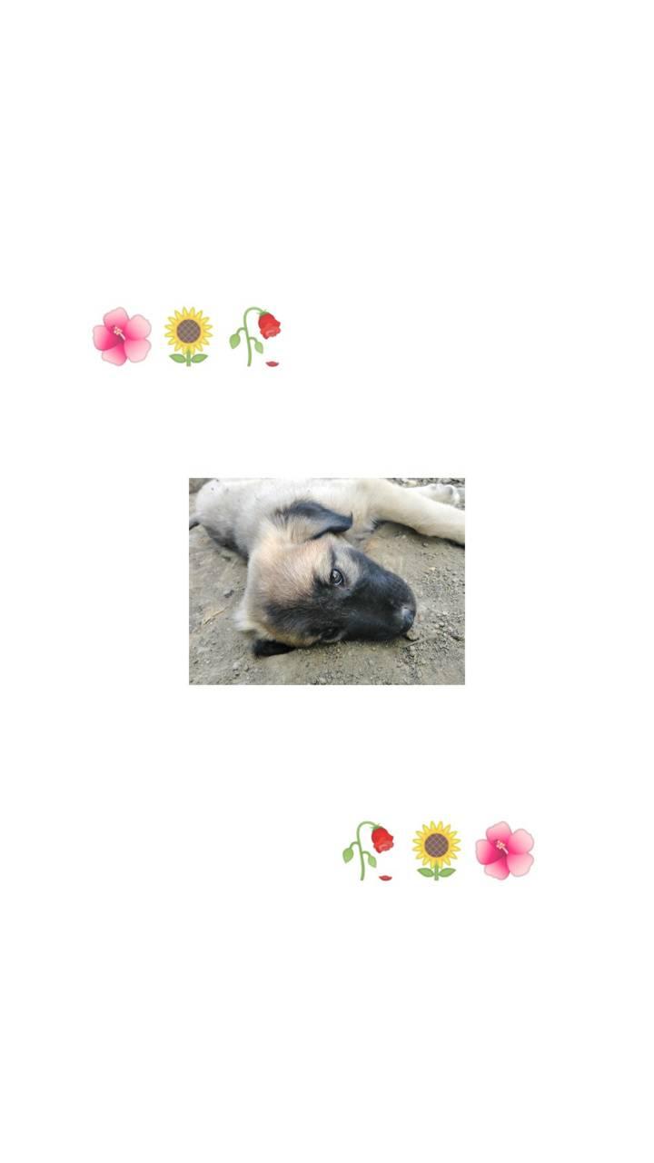 Cute dog Aestethic