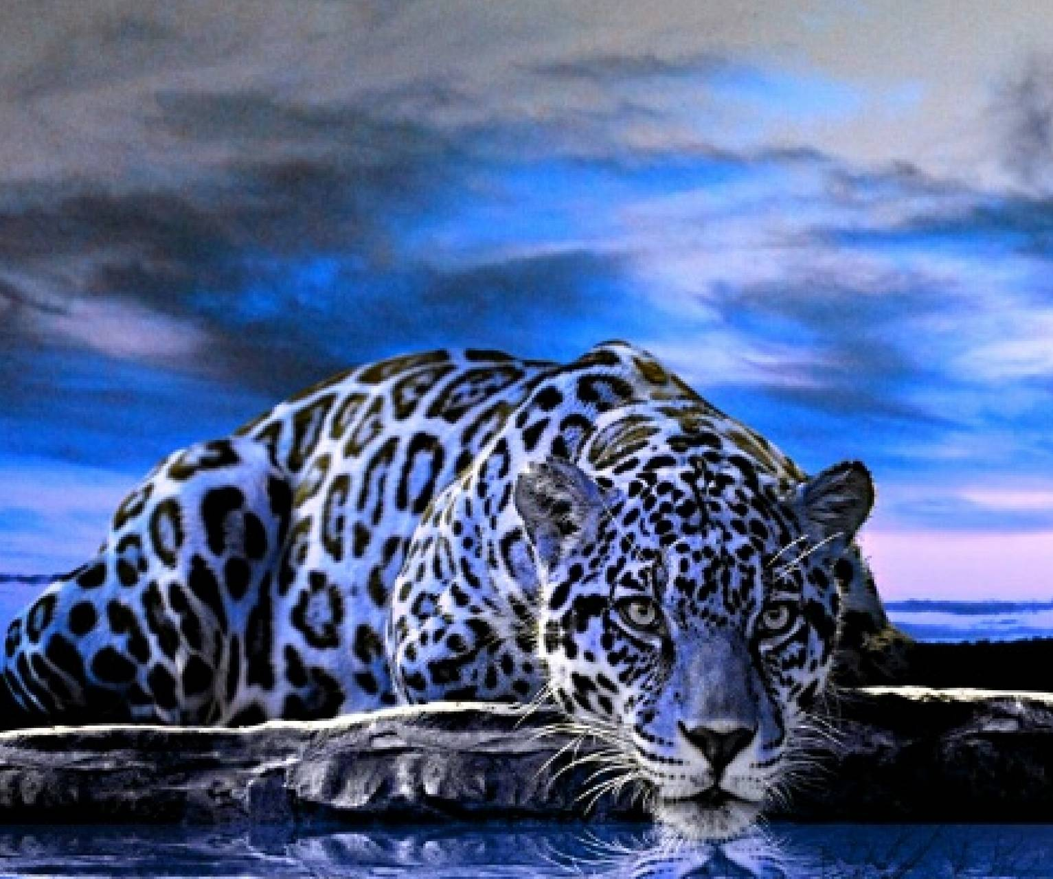 Blue Jaguar Cat Wallpaper By Sphinxlars